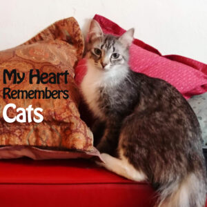 My Heart Remembers – 117 – Cats!